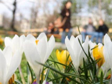 Der Frühling zeigt sich auch in der nächsten Woche.