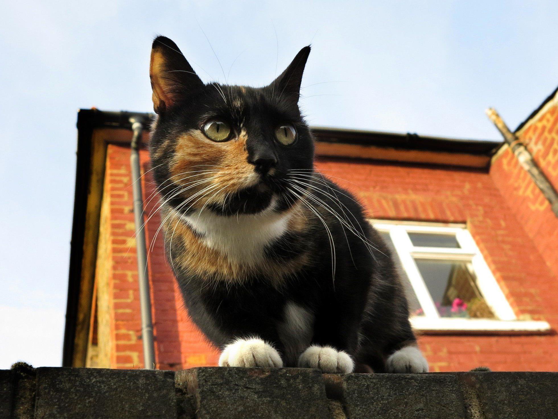 Streunende Katzen bekamen ein enges neues Zuhause.