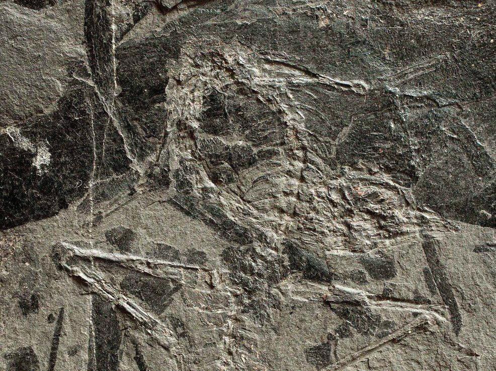 Kleinwüchsigen Saurier-Verwandten mit langem Hals und langem Schwanz oberhalb von Seefeld entdeckt.