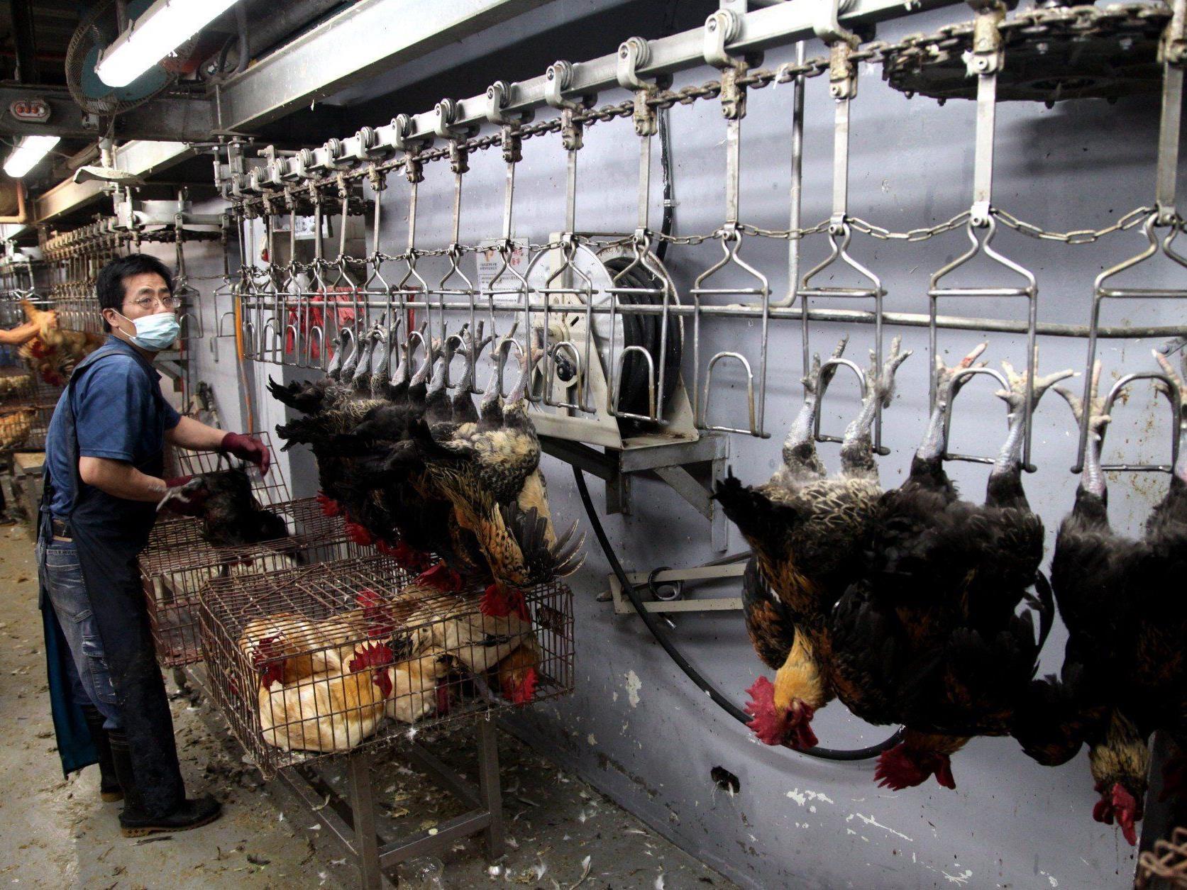 Die Geflügelbranche hat rund 6,5 Mrd. Dollar eingebüßt.