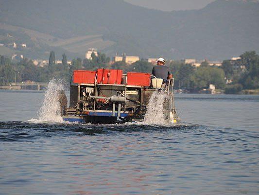 Mäharbeiten in der Alten Donau sorgen für ungetrübtes Badevergnügen