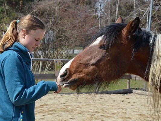 Pferdeflüstern kann man bei Workshops in Schönbrunn erlernen