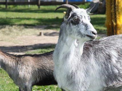 Über 40 Tierarten leben im Zoo der Blumengärten Hirschstetten