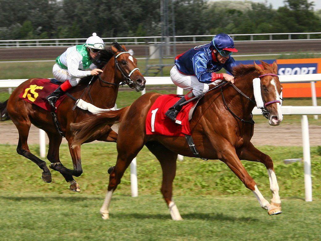 Am kommenden Sonntag findet im Magna Racino das bereits 145. österreichische Galopper Derby statt.