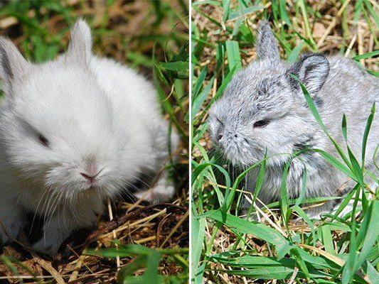 Diese niedlichen Kaninchen werden derzeit im Wiener Tierschutzhaus vergeben