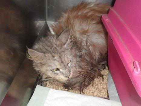 Diese Katze war in einen Koffer gesperrt und ausgesetzt worden.