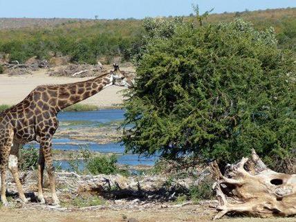 So gelingen Ihre Safari-Fotos auf jeden Fall.