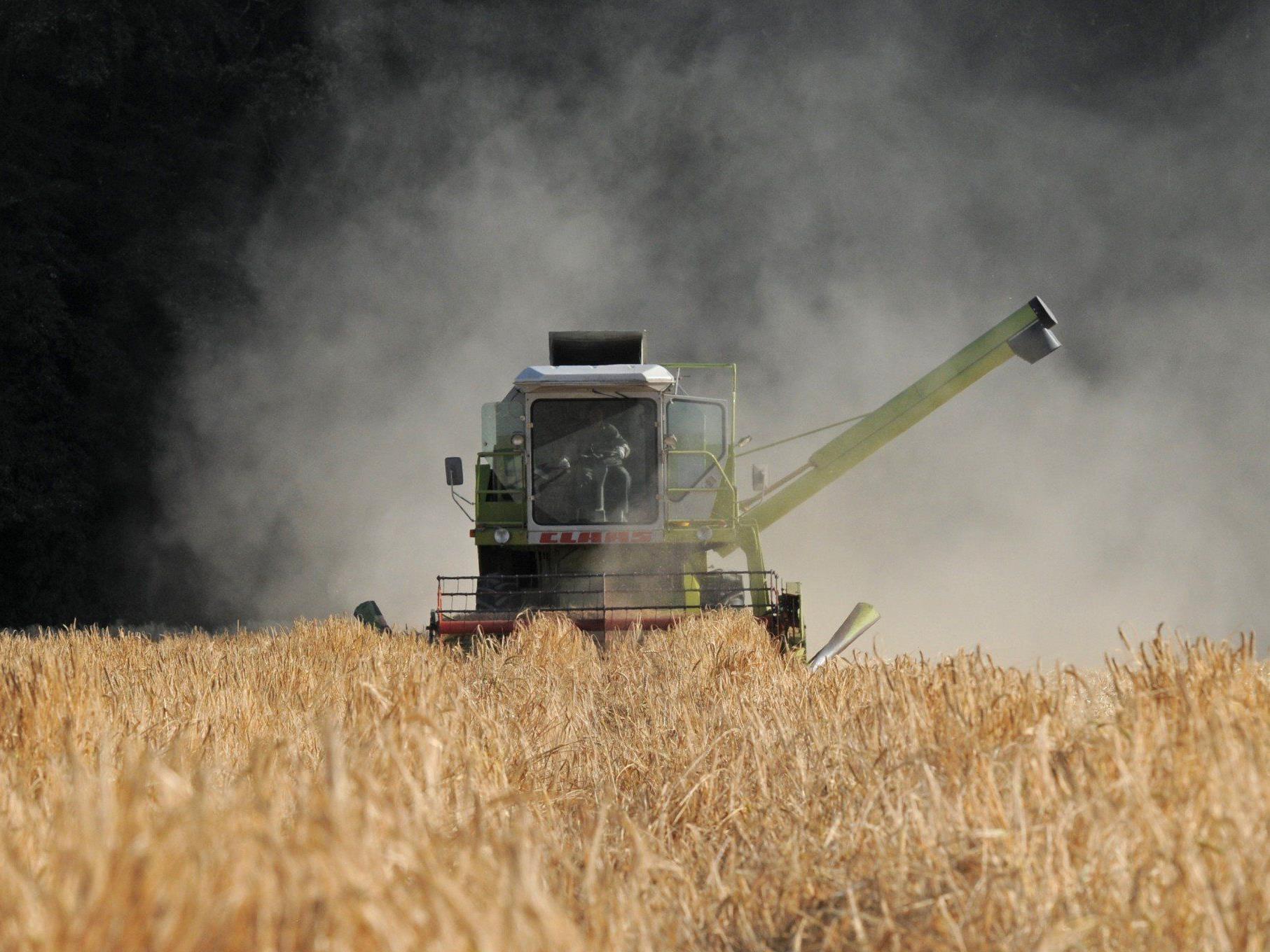 Trockenheit - Wiener Bauern rechnen mit bis zu 35 Prozent Einbußen