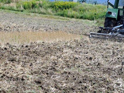 Wegen der anhaltenden Hitze müssen die Bauern mit Ernteschäden rechnen.