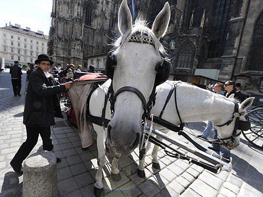 Fiaker-Pferde leiden unter der Sommerhitze