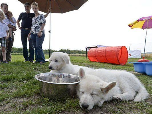 Im ersten Wiener Hundekompetenzzentrum