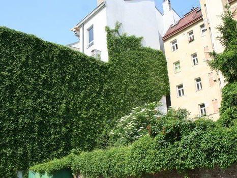 Auch heuer werden wieder die schönsten begrünten Fassaden der Stadt gesucht.