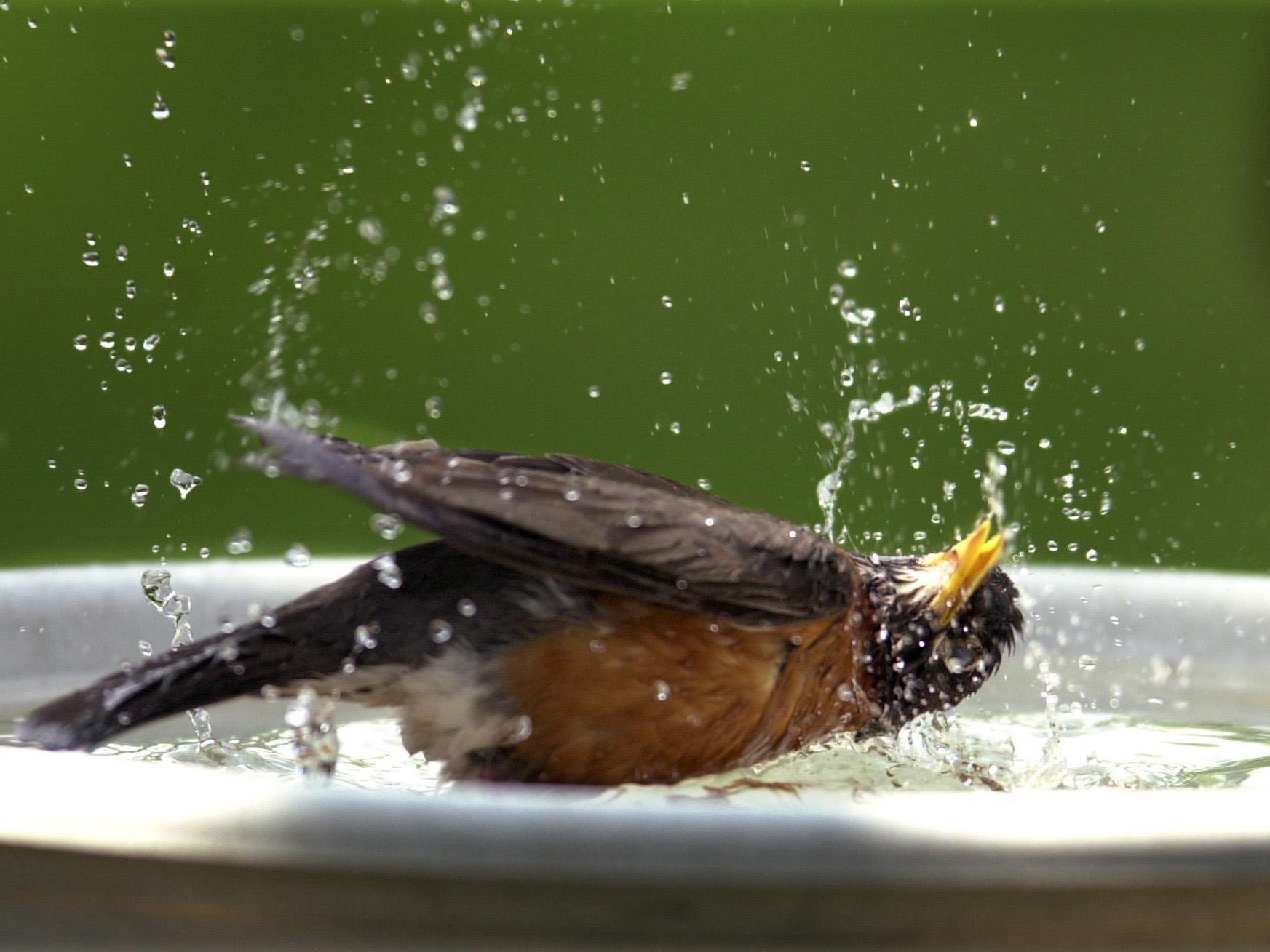 Tiere haben verschiedene Strategien entwickelt, um mit der Hitze umzugehen.