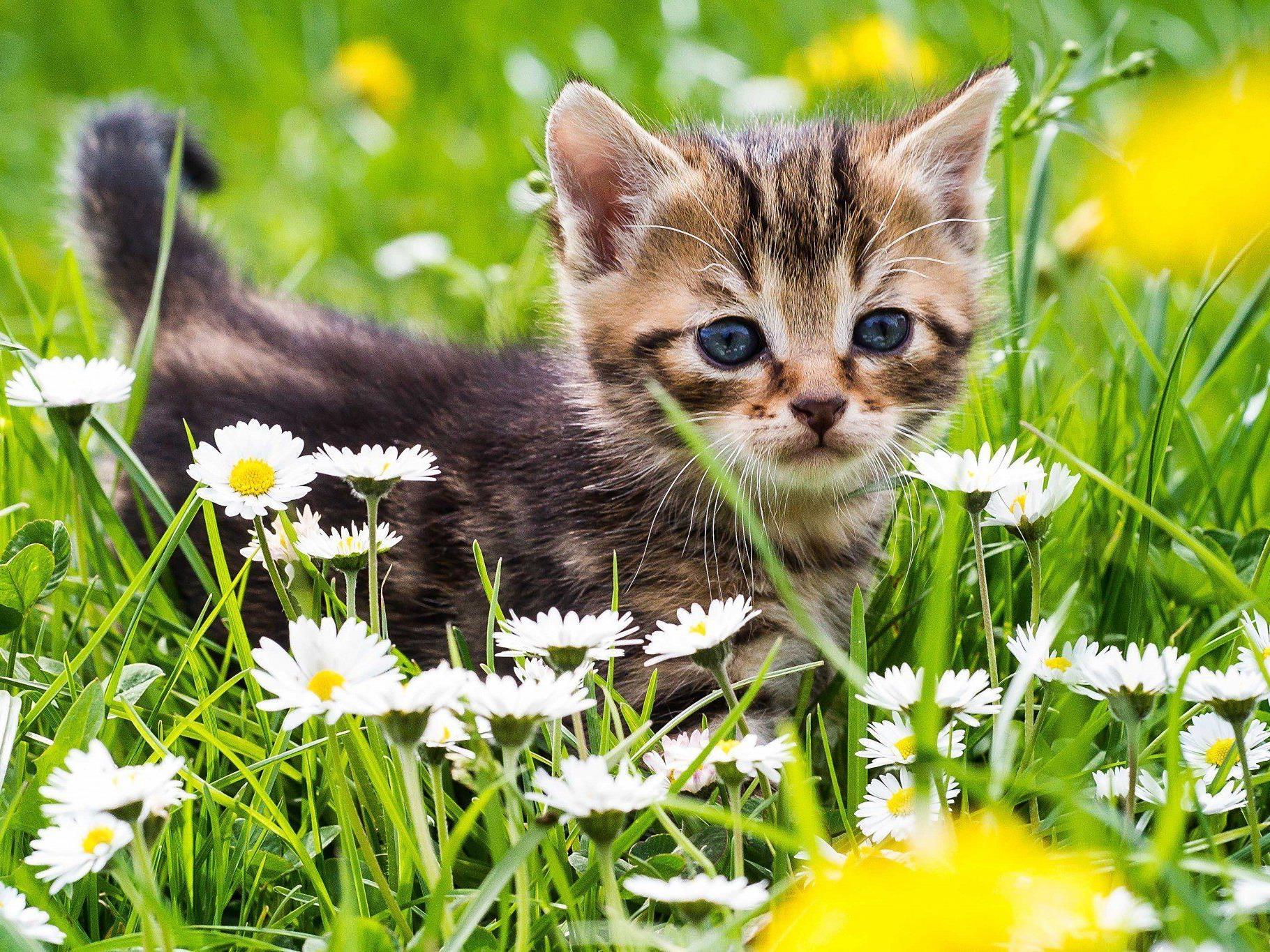 Am 8. August ist Tag der Katze: Die wichtigsten Fakten über unsere Schmusetiger.