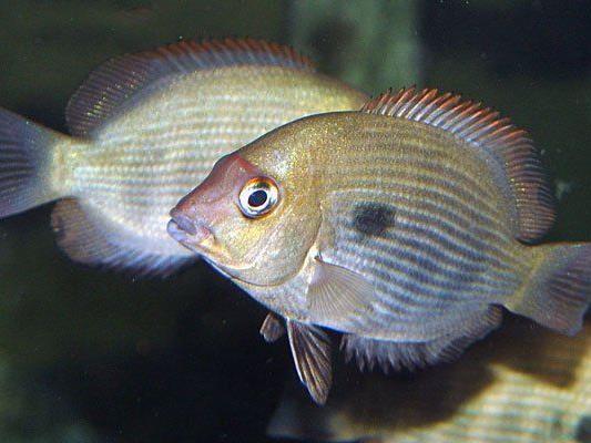 Der Damba Mipentina fand im Haus des Meeres eine neue Heimat