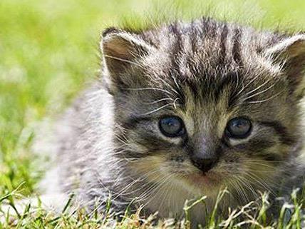 Katzen sind nicht umsonst als Haustiere sehr beliebt