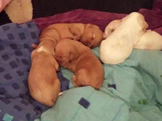 Diese Hundewelpen fand man in der Wohnung