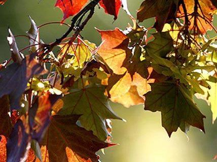 Der astronomische Herbstbeginn zeigt sich auch sonnig.