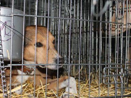Demo für Hunde in Wien am Samstag.