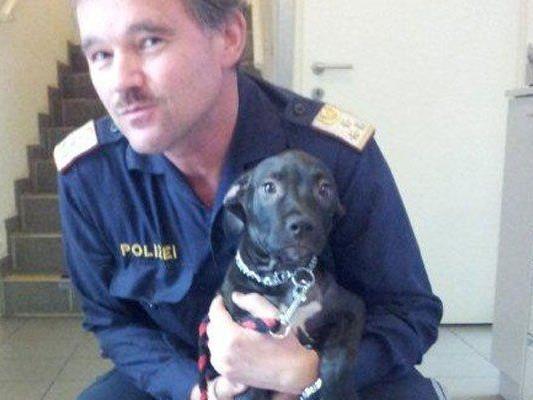 Wien – Ottakring: Hund in Müllcontainer geworfen