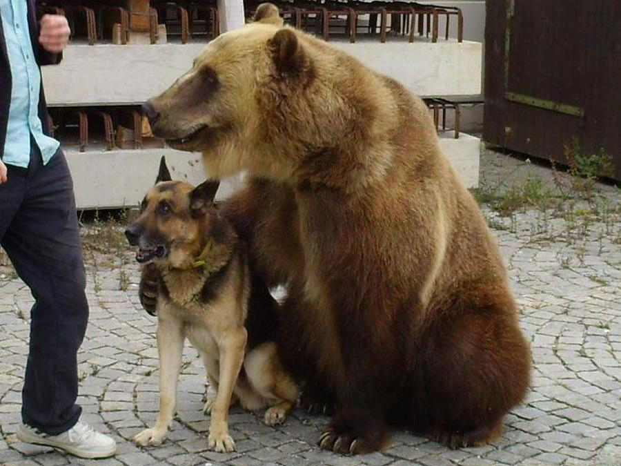 Grizzlybär bei Kontrolle auf Autobahn in Lastwagen entdeckt