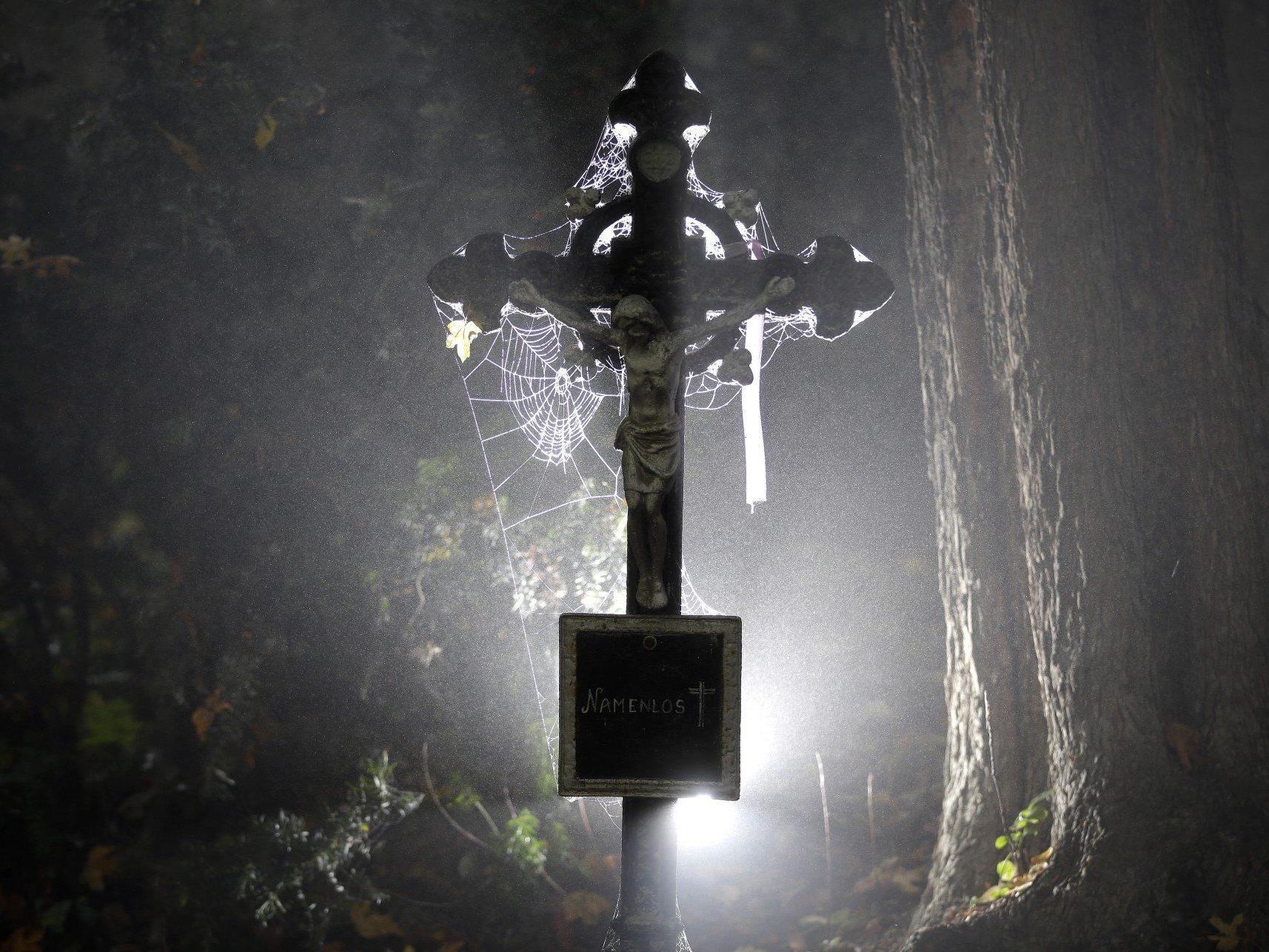 Wiens Friedhöfe wollen umweltfreundlicher werden