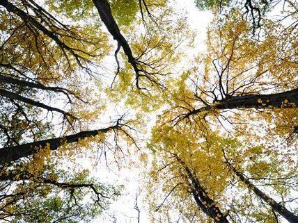 """Im Rahmen der Aktion """"Wald aktiv"""" planzten Schüler mehrere tausend Bäume und Sträucher."""