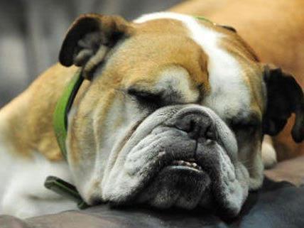 Am 6. Oktober dreht sich beim Aktionstag in Floridsdorf alles um Hunde.
