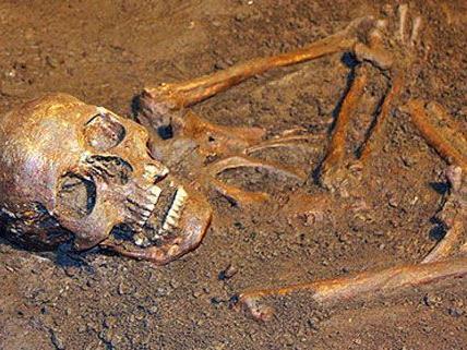 4.000 Skelette wurden in St. Pölten untersucht.