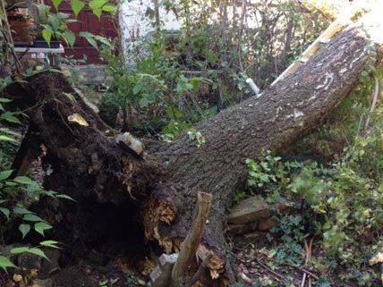 Durch den Sturm wurde der Baum entwurzelt.