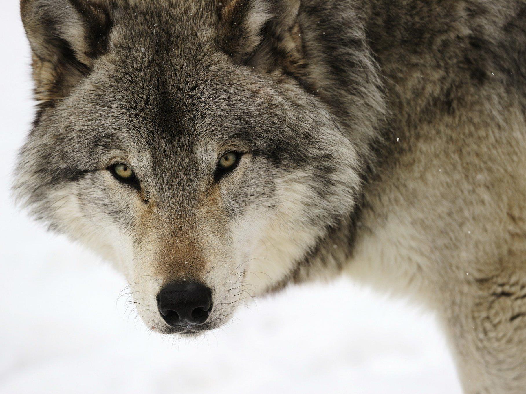 Lernen Sie Kanada und auch seine Fauna kennen.