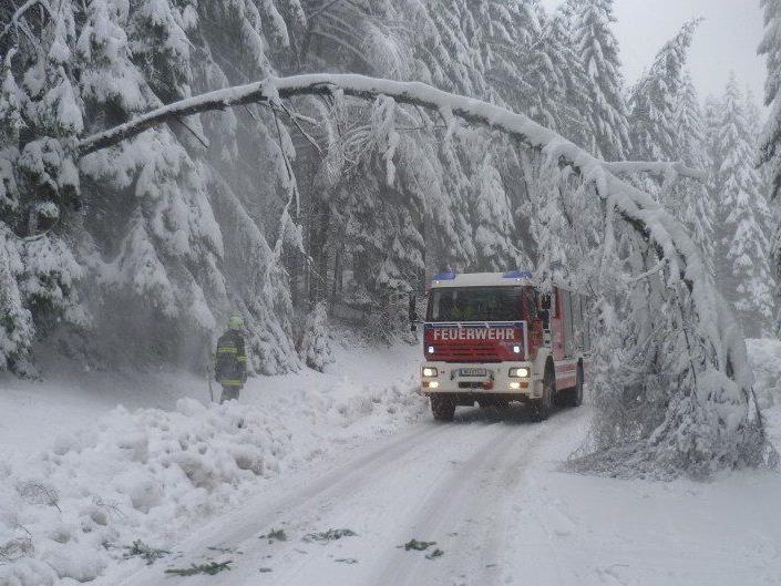 Starke Schneefälle: Am Sonntag mussten in Niederösterreich umgeknickte Bäume von den Straßen entfernt werden.