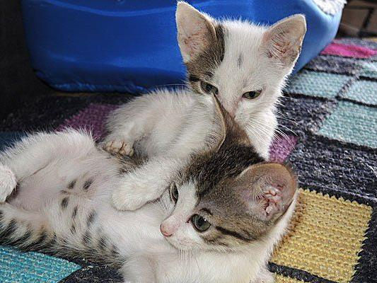 So süß spielen Thelma & Louise