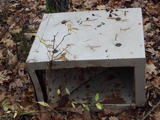 Dieser Tresor wurde im Wald entdeckt