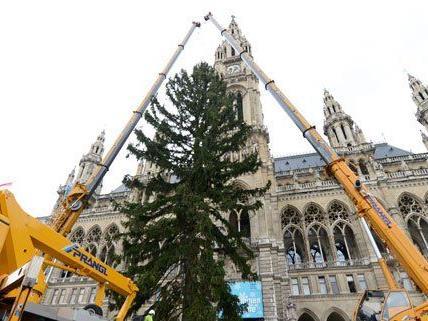 Der Weihnachtsbaum am Rathausplatz wurde aufgestellt.