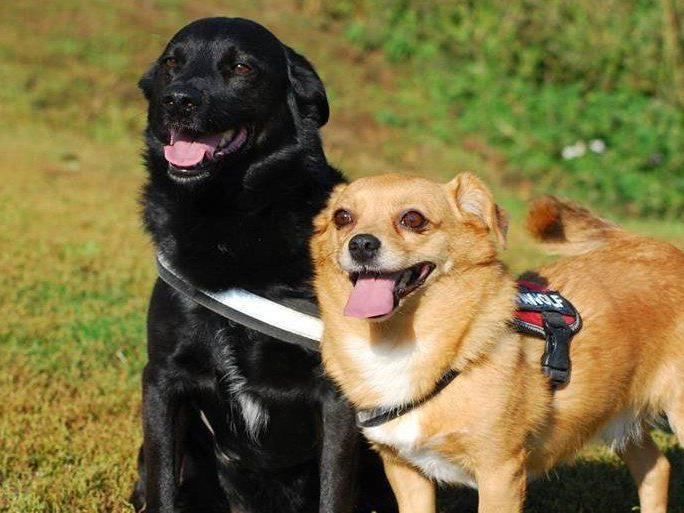 Blacky und Shakira suchen gemeinsam ein neues Zuhause.