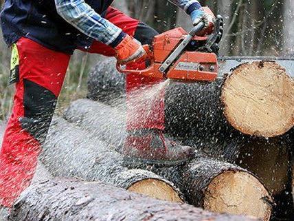 Schwerer Forstunfall am Samstag in NÖ.