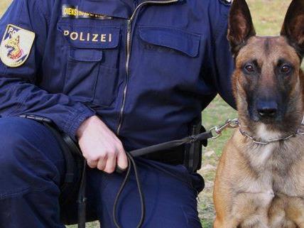 Ein Spürhund fand Drogen im Park.
