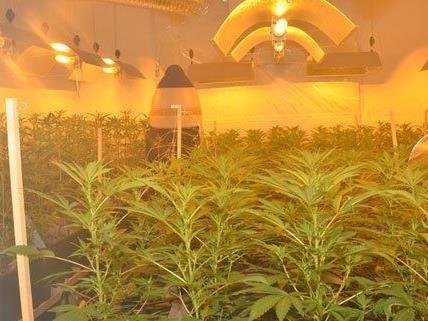 Hanfplantage in einer Wohnung im 4. Bezirk.