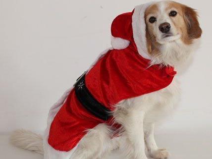 Am 1. Dezember findet im Tierschutzhaus ein Adventmarkt statt.