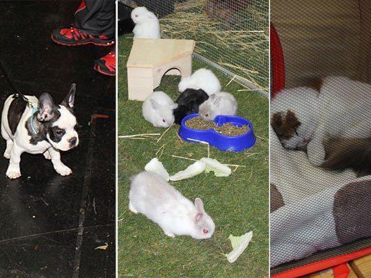 Hunde, Nager und Katzen - das sind nur einige der zahlreichen Tiere, die es auf der Haustiermesse zu bewundern gab