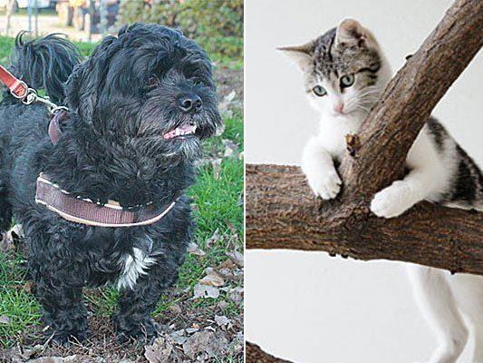 Glücklich vergeben: Rüde Rusty und Katze Elu