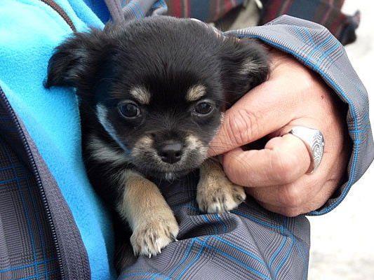 Viele Hunde aus dem Wiener Tierschutzhaus fanden ihr Glück