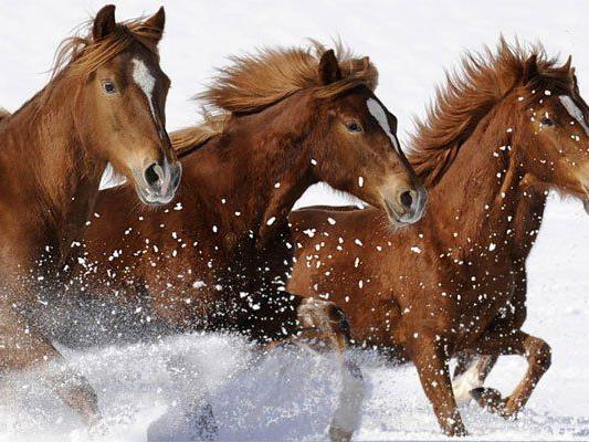 Das neue Jahr 2014 steht im Zeichen des Pferdes.