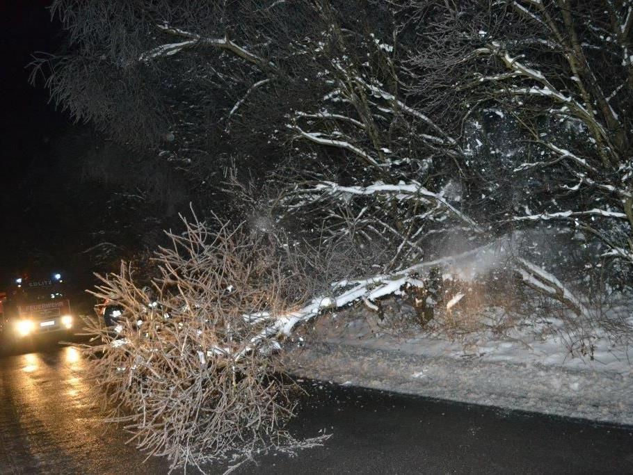 Winterwetter - Umgestürzte Bäume sorgten für Sperre der A2 in NÖ