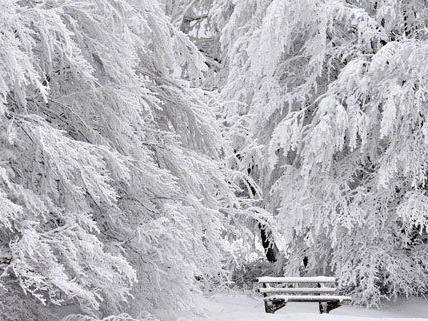 Der Winter hat Teile Sloweniens fest im Griff.