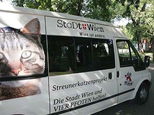 Das Streunerkatzenmobil ist wieder on tour