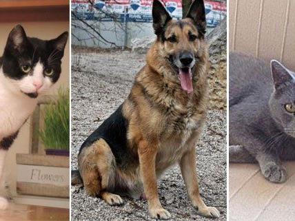 Glücklich über neues Daheim: Avani, Philip und Hedy