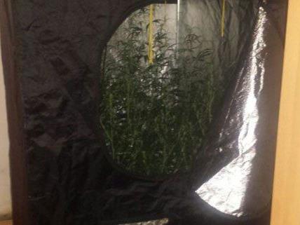 Die Polizisten bemerkten den Marihuana-Geruch in der Wohnung sofort.