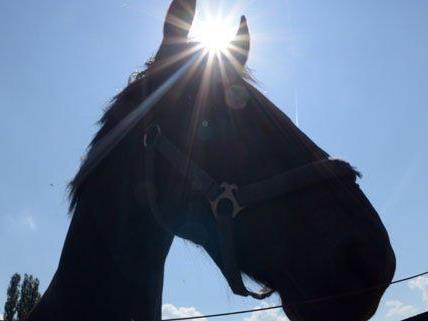 Zehn Pferde im Burgenland sind vergiftet worden.